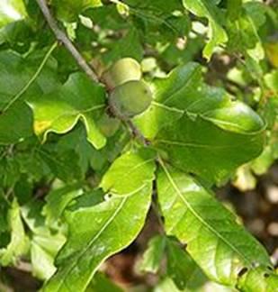 Réunion pour la situation de la filière bois dans les Ardennes