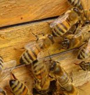 Apiculture - Liart