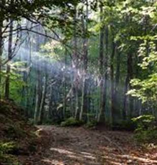 A la découverte des secrets forestiers