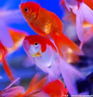 Bourse aux poissons
