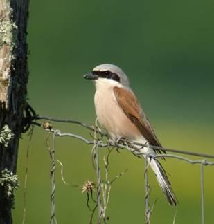 Conférence sur les oiseaux de la Vallée de l'Aisne