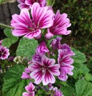 Marché au fleurs - Brocante