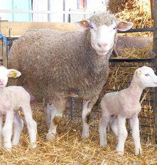 Fête de la volaille & de l'agneau