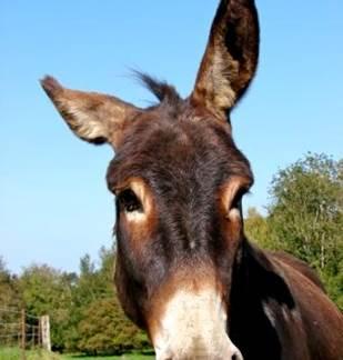 Un âne en Ardennes