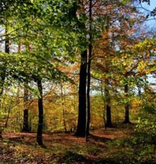 Fête des forêts