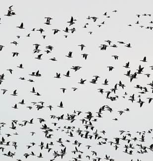Suivi de la migration des oiseaux sur les tourbières de la Bar