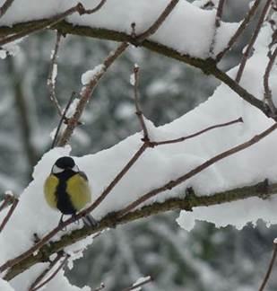 Sortie nature : Les oiseaux hivernants du lac de Sedan