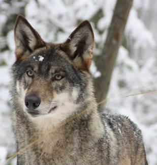 Parc Argonne Découverte : Ouverture hivernale