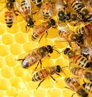 Stage initiation à l'apiculture