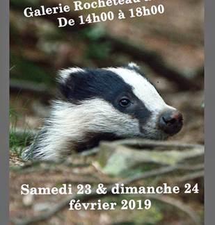 Exposition photos animalières