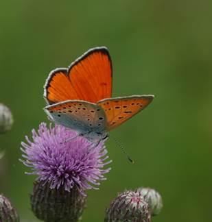 Découverte du site Natura 2000 : les Prairies d'Autry