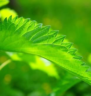 Balade culinaire : Plantes comestibles et médicinales