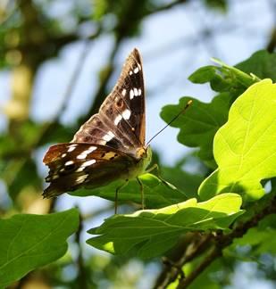 Les papillons de la pointe de Givet