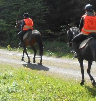 Ferme Equestre de la Croix Colas - Balades à cheval