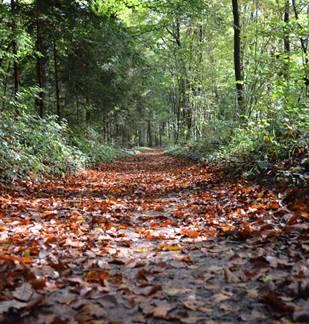 Découverte des Forêts du site Natura 2000 à chiroptères de la Vallée de la Bar