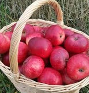Entre torchis et pommes - Liart