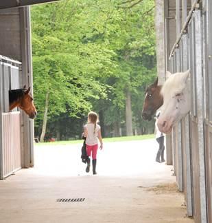 Les Mannesarts équitation