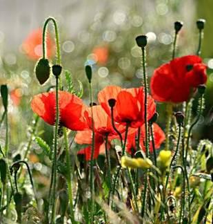 Sortie nature : Les plantes médicinales