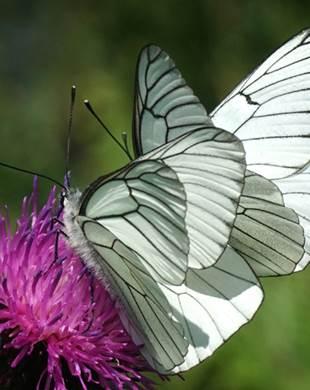 Découverte faune et flore par l'observation et la photo