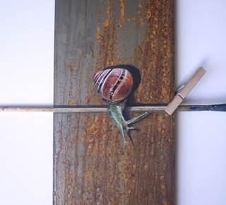Exposition Yoyo Ich - Peintre au Moulin de Pen Castel