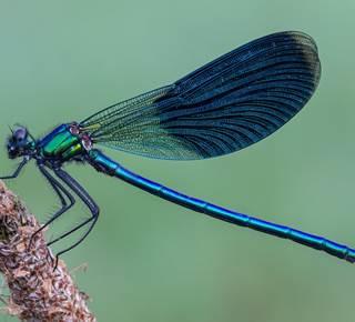 Papillons, libellules et autres petites bêtes
