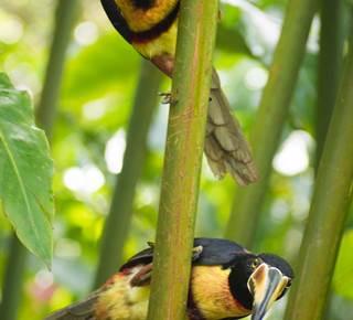 Costa Rica - Nicaragua - Paradi vert - Un film documentaire de Lilian Vezin à l'Abbaye de Rhuys