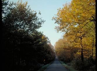 Forêt domaniale d'Agre ou Forêt de Montech