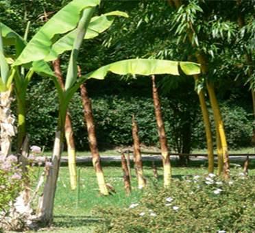 Parc aux bambous