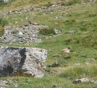 les marmottes réserve d'Orlu