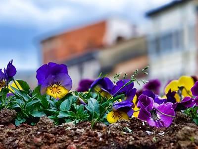 Marché aux Fleurs et aux plants de légumes