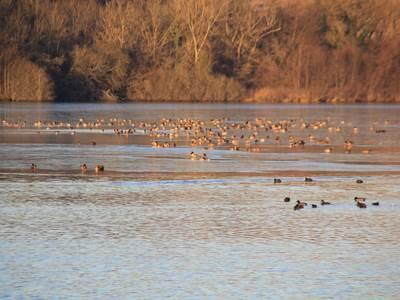 Les oiseaux migrateurs du Vieil-Etang