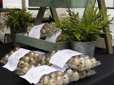 Le p'tit œuf ardennais - Cailles et œufs de cailles