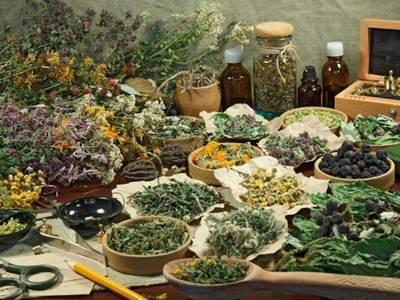 Atelier d'herboristerie à l'abbaye Laval Dieu