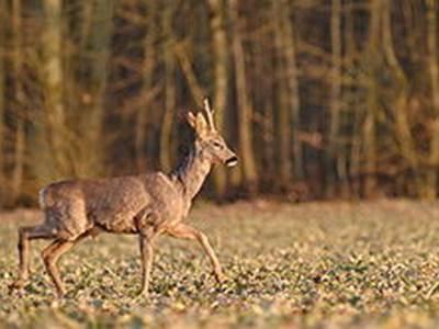 "Sortie Nature ""Observation de la grande faune sauvage"""