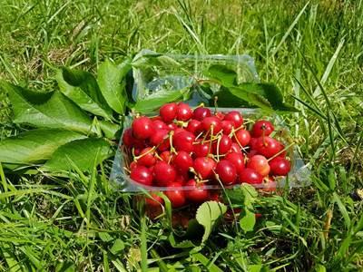 LES VERGERS COURTOIS - COURTOIS Jean-Philippe & Laure