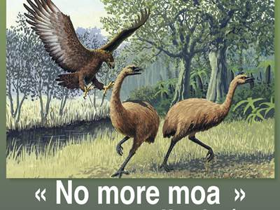 """Conférence """"No More Moa"""""""