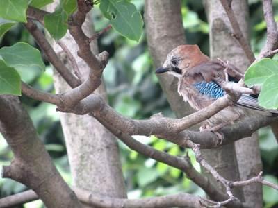 """Sortie nature: Jeu de piste """"Les oiseaux de la forêt"""""""