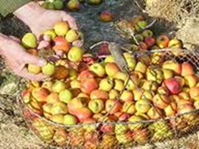 Foire aux Pommes