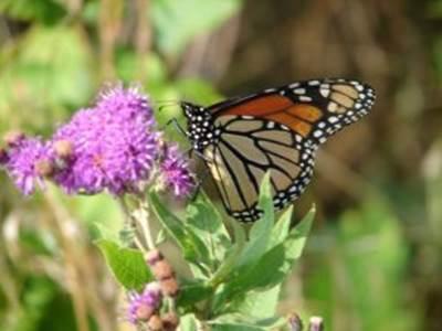 Des papillons hauts en couleurs