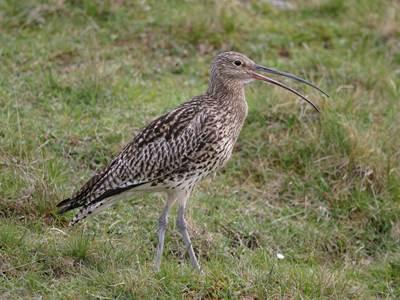 """Sortie Natura 2000 : """"Découverte des oiseaux prairiaux"""""""