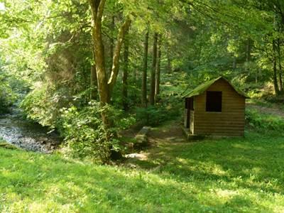 Bois du Douaire, au coeur de la forêt de La Chapelle