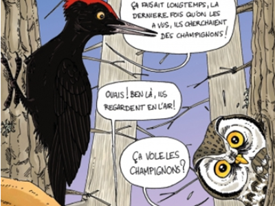 """Sortie Nature """"Oiseaux chanteurs et enchanteurs"""""""