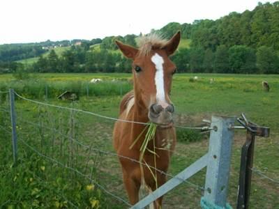 Balades à dos de poney