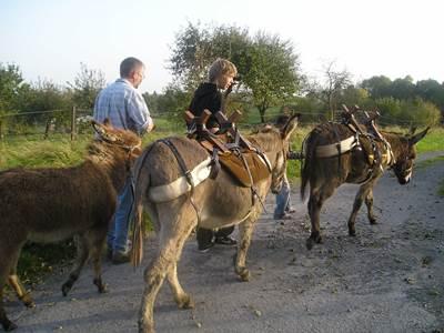 Randonnée avec des ânes de bât