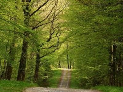 """Sortie Nature """"Découverte de la forêt en été"""""""