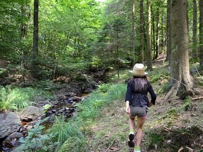 Le Grand Hez, une forêt aux secrets bien gardés...