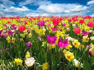 Marché du printemps