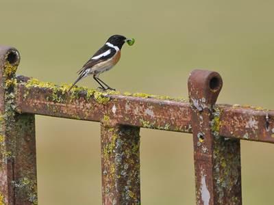 Conférence : Les oiseaux de la vallée de l'Aisne
