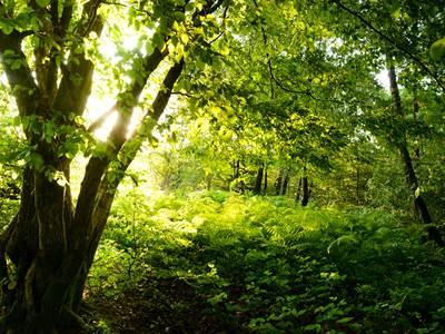Bois de L'Aire aux Oiseaux, au coeur d'une forêt millénaire