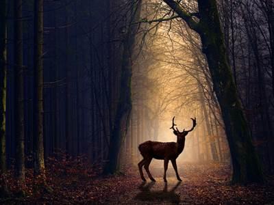 Sortie nature: La faune nocturne en forêt